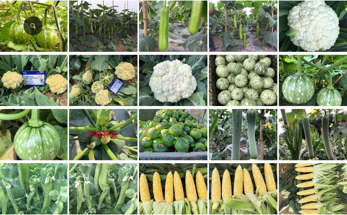 四川泸旺种业有限公司签约博优种子二维码系统