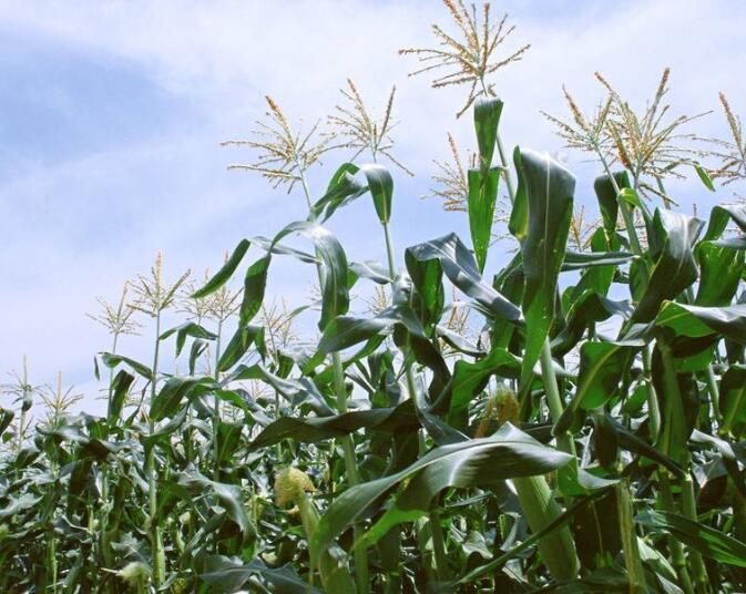 四川云海农业科技有限公司合作博优种子二维码系统